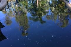 before-pool-clean-mackay-on-top-pools